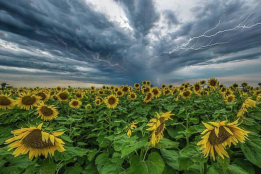 Beautiful Disaster  by Aaron J Groen