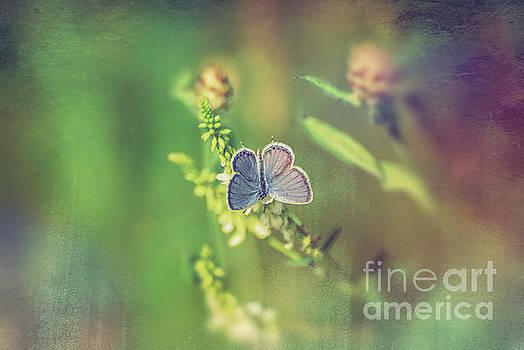 Beautiful Dreamer by Kerri Farley