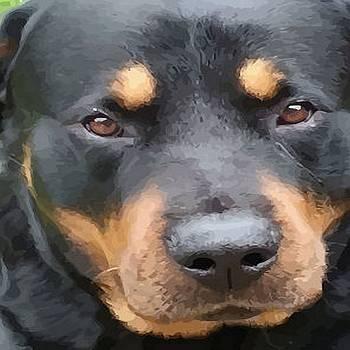 Tracey Harrington-Simpson - Beautiful Female Rottweiler Portrait Vector