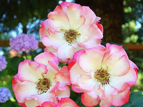 Baslee Troutman - Beautiful Floral Roses Garden art prints Baslee Troutman