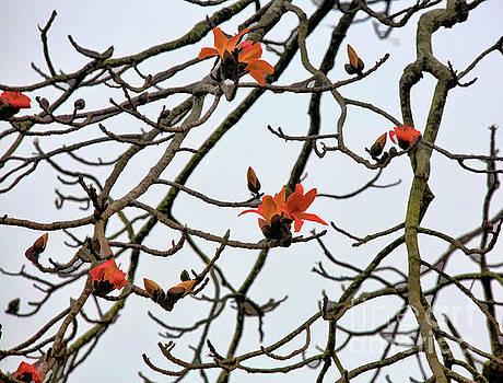 Chuck Kuhn - Beautiful Flower Blossoms