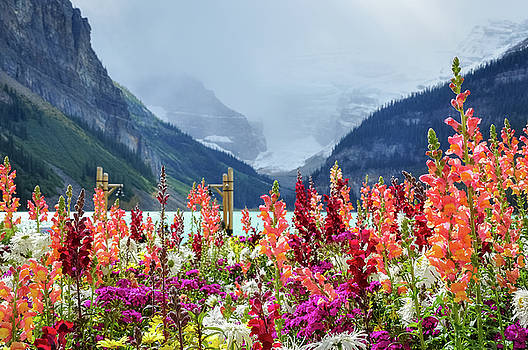 beautiful flowers at lake Louise by Daniela Constantinescu