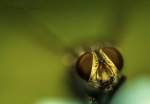 Beautiful fly by Vijay Kumar
