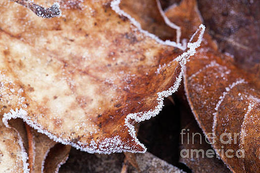 Beautiful frosted autumn leaves close up by Simon Bratt Photography LRPS