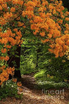 Mike Reid - Beautiful Garden Canopy of Azaleas