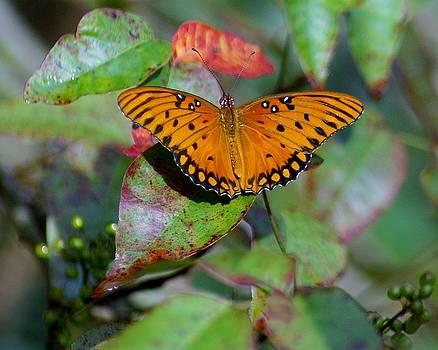 Patricia Twardzik - Beautiful Gulf Fritillary Butterfly