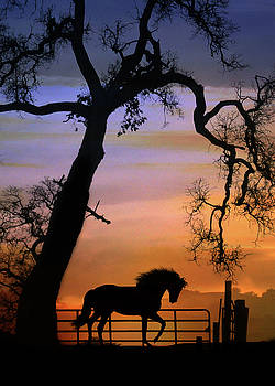 Beautiful Horse and Fence with Oak Tree Sunrise Silhouette by Stephanie Laird