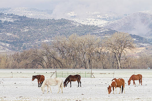 Beautiful Horses Geese and Snow by James BO Insogna