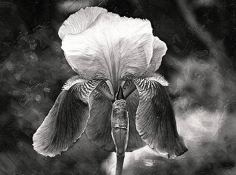 Beautiful Iris in Black and White by Trina Ansel