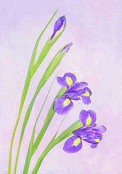 Beautiful Iris by Roy McPeak