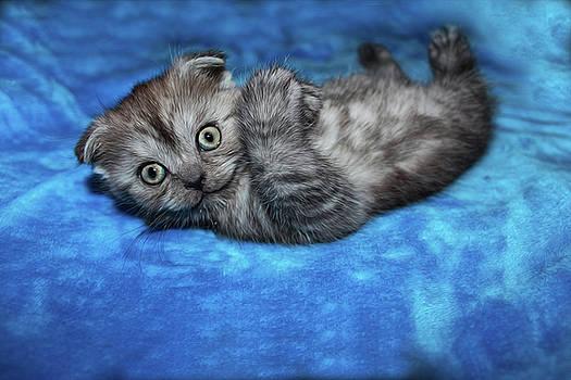 Beautiful Kitten by Tatiana Tyumeneva