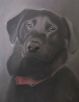 Beautiful Labrador Retriever by Inge Lewis