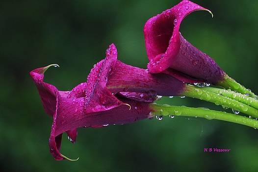 Beautiful Lilies by B Vesseur