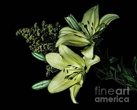 Beautiful Lillies by Carol Bilodeau
