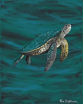Beautiful Little Green Sea Turtle by Ron Dietman