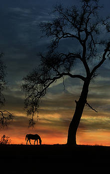 Beautiful Oak Tree and Horse in Sunset by Stephanie Laird