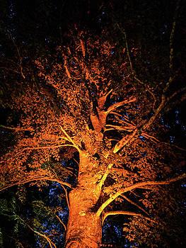 Michael Bessler - Beautiful orange tree at night