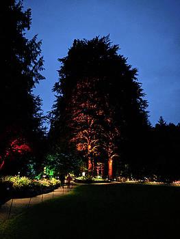 Michael Bessler - Beautiful orange tree from far away