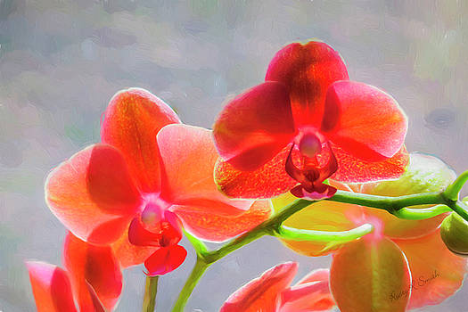 Beautiful Orchid Blossoms by Rusty R Smith
