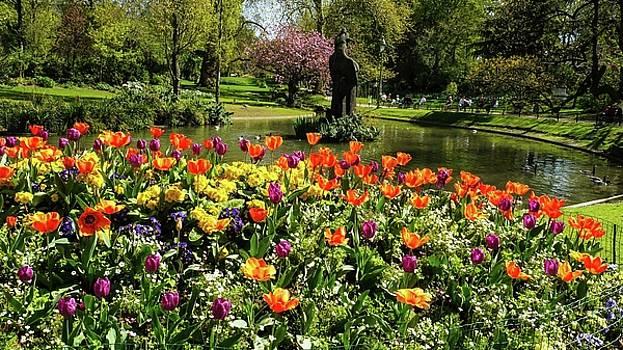Beautiful park  with tulip flowers by Tamara Sushko