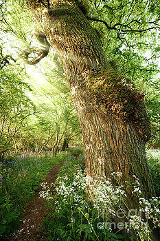 Beautiful path through spring woodland by Simon Bratt Photography LRPS