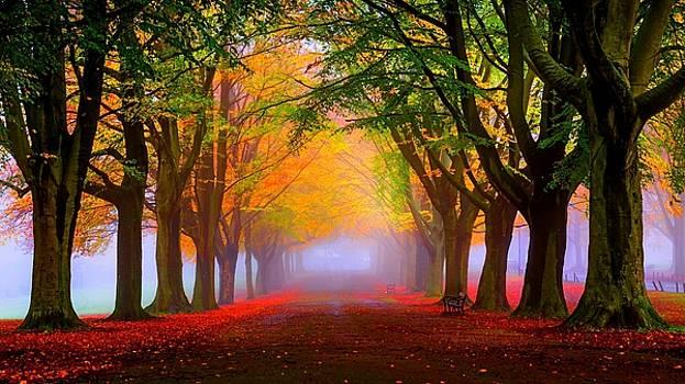 Beautiful Place by Luke lonergan by Luke Lonergan