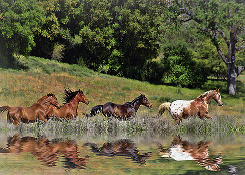 Beautiful Running Herd of Horses with Reflection  by Stephanie Laird