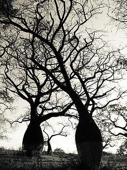Beautiful silk floss trees by Helissa Grundemann
