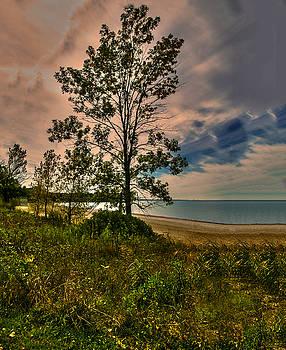 Beautiful Sky and a Tree by Jim Markiewicz