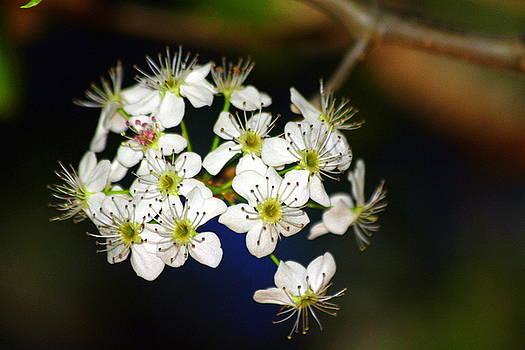 Beautiful spring blooms by Billie Earley