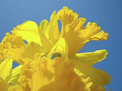 Baslee Troutman - Beautiful Spring Daffodil Bouquet Flowers Blue Sky Art Prints Baslee Troutman