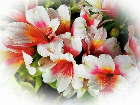 Beautiful Spring Flowers by Wendy Bechtold