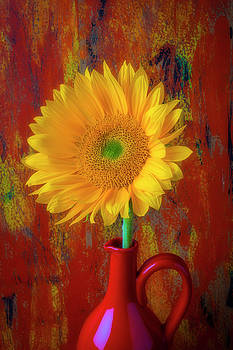 Beautiful Sunflower In Red Pitcher by Garry Gay