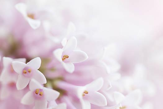 Valdecy RL - Beautiful Tender Gentle Delicate Flower