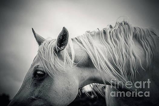 Dimitar Hristov - Beautiful Tender White Horse Portrait Close Up