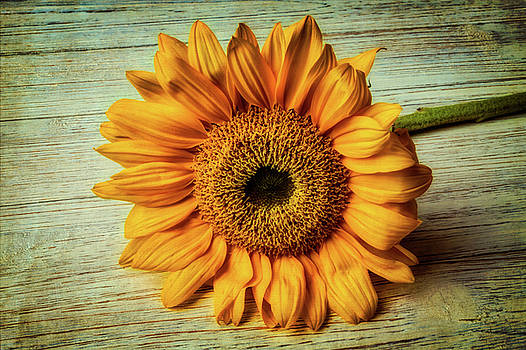 Beautiful Textured Sunflower by Garry Gay