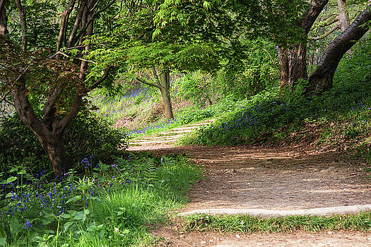 Beautiful vibrant landscape image of footpath through English wo by Matthew Gibson