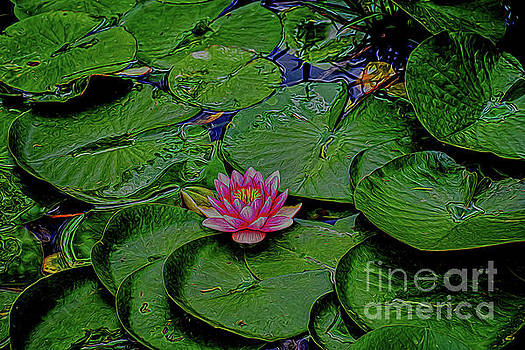 Beautiful Water Lily 2 by Ray Shrewsberry