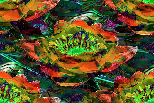 Beautiful water lily by Ivanoel Art