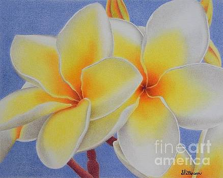Beautiful White Plumeria by Sharon Patterson