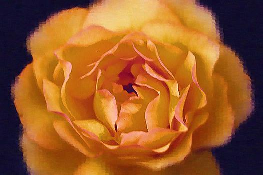 Beautiful Yellow Rose by Jackie Sampers-Kilby
