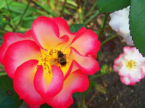 Beauty and Nectar by Mark Cheney