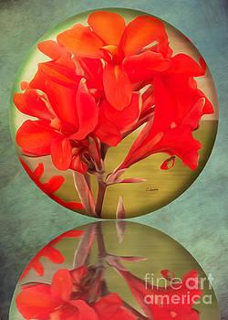 Beauty by Claudia Ellis