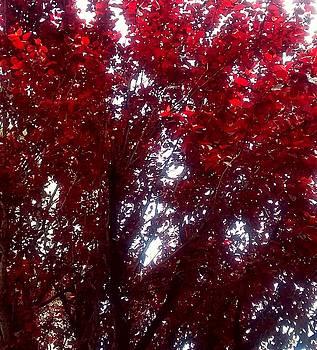 Beauty-Full red  by ONDRIA-UNIqU3-Pics- Admin