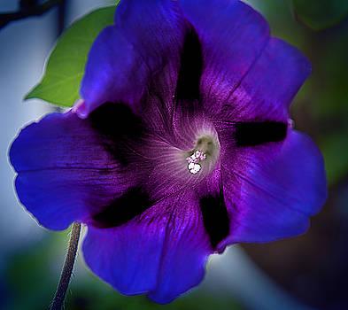 Milena Ilieva - Beauty in Blue