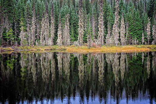 Beauty in Idaho Bog by L J Oakes