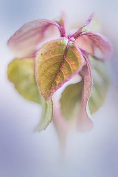 Elvira Pinkhas - Beauty in Nature