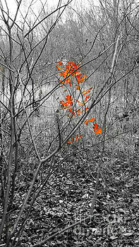 Beauty in Nature SC by Robert ONeil