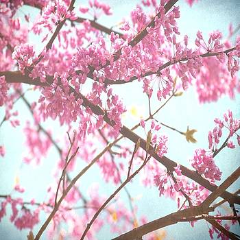Beauty In Pink by Itaya Lightbourne