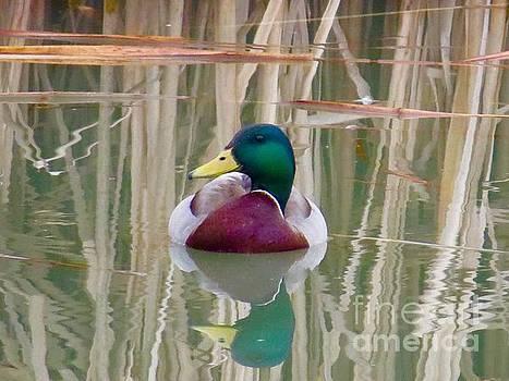 Beauty in reflections by Brenda Ketch
